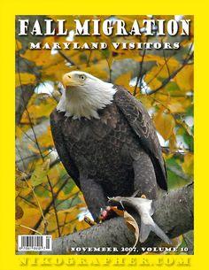 Bald Eagle Migration(s) @ Conowingo Dam, Maryland by Nikographer [Jon], via Flickr
