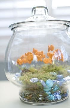 hello, Wonderful - 100 DAYS OF SCHOOL PROJECT: GOLDFISH BOWL