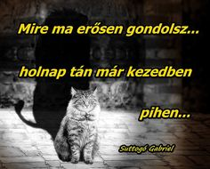 Gabriel, Life Quotes, Cats, Animals, Quotes About Life, Archangel Gabriel, Quote Life, Gatos, Animales