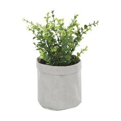 Refresh your home decor with this plant that comes in a pouch - place it on windowsills or coffee table for a touch of greenery. Fake Plants Decor, Faux Plants, Plant Decor, Touch Lamp, Bathroom Plants, Hanging Pots, Snake Plant, Terracotta Pots, Artificial Plants