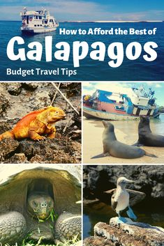You can, in fact, tour the Galapagos on a budget! With a little planning, it's possible to formulate a cheap Galapagos island hopping budget trip on your own. We wrote this post to help travelers in do exactly that! #Galapagos #Ecuador #BudgetTravel #SouthAmerica