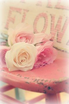 ♥ Roses