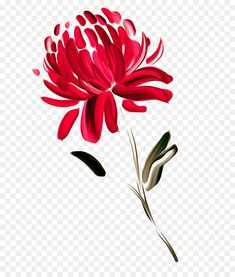 This PNG image was uploaded on January am by user: and is about Chrysanthemums, Chrysanths, Color, Dahlia, Daisy Family. Chrysanthemum Drawing, Chrysanthemum Flower, Crysanthemum Tattoo, Waratah Flower, Dahlia, Pink Flowers, Exotic Flowers, Yellow Roses, Pink Roses