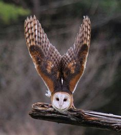 Amazing click of an owl!!