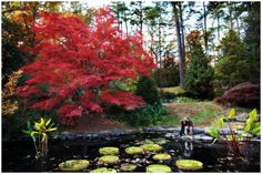 Vibrant color in the gardens.