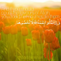 If you should count the favours of Allah you could not enumerate them