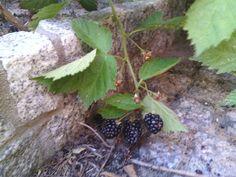 In my garden Mmmm niam