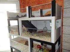 cage cochon d'inde