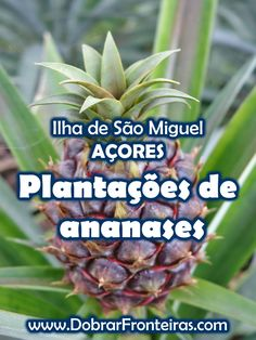 Plantações de ananases nos Açores #acores #viagem #natureza #ananas Azores, We Are The World, Vacation, Ponta Delgada, Travel, Islands, Design, Travel Inspiration, Travel Tips