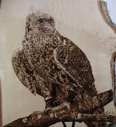 Falke, Brandmalerei, Greifvogel, Pyrografie, Holzkunst, Tier