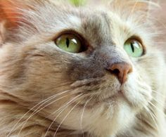 Introducing a New Cat to Other Pets : The Humane Society of the United States