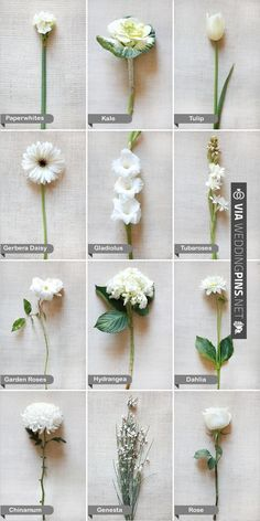 Flower names by color flower flowers and gardens florist flowers types google search mightylinksfo