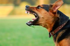 Dog Behaviourist Consultant North West UK - http://www.dog-ramblers.co.uk/dog-behaviourist-consultant/  #DogBehaviouristUK