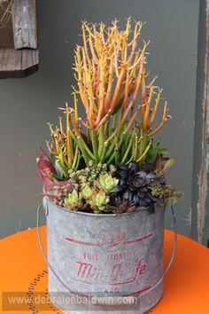 Chicweed - eclectic - outdoor planters - san diego - Debra Lee Baldwin
