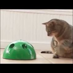 Funny Cat Interactive Toy At Scratching Device For Cat Sharpen Claw Pop Cat Trai.,Funny, Funny Categories Fuunyy Funny Cat Interactive Toy At Scratching Device For Cat Sharpen Claw Pop Cat Training Toy Source by Unique Animals, Animals And Pets, Funny Animals, Cute Animals, Cute Cats, Funny Cats, Pop Cat, Gato Gif, Gatos Cats