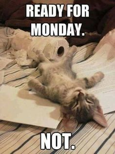 Sometimes don't you just wish you could skip Mondays?  Check out 905business.com for more fun like this!