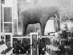 Saint Louis Usa, St Loius, 19th Century England, Louisiana Purchase, White City, Historical Images, Forest Park, World's Fair, History Museum
