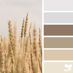 <p>Launched by Jessica Colaluca, Design Seeds is a color and inspiration site that celebrate colors found in nature and the aesthetic of purposeful living. Design Seeds has become her full-time job, a