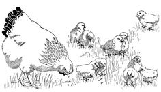 """Luke 13:31-35 """"...as a hen gathers her brood under her wings..."""" Revised Common Lectionary Year C 2nd Sunday in Lent"""