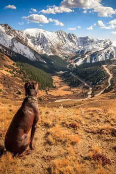 I must do this with my dogs soon. Loveland Pass, Colorado.