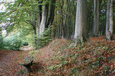 Autum Korsør Wood