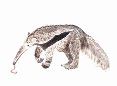 ANTEATER Original watercolor painting by Mydrops on Etsy