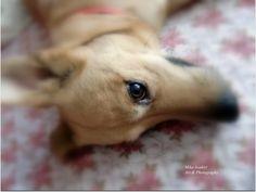 Beautiful Eyes, Dogs, Animals, Pretty Eyes, Animales, Animaux, Pet Dogs, Doggies, Animal