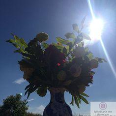 Summer Wedding, Wedding Flowers, Christmas Tree, Holiday Decor, Plants, Teal Christmas Tree, Xmas Trees, Plant, Christmas Trees
