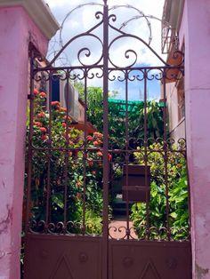 Flor de dura detrás de este portal