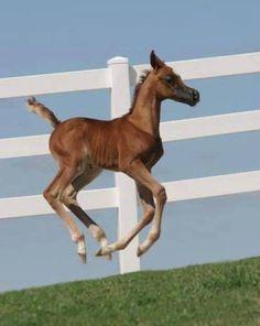 Did I make the team, Santa? I Horses All The Pretty Horses, Beautiful Horses, Beautiful Babies, Animals Beautiful, Baby Horses, Cute Horses, Horse Love, Baby Animals, Cute Animals