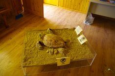 Caretta-caretta is the turtle of the sea reservation. - life of turtle museum at Gerakas Beach Turtle, Greece, Museum, Beach, Life, Greece Country, Turtles, The Beach, Tortoise