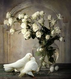 Kissing doves