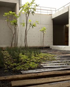 sebastian mariscal garden tijuana mexico