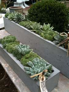 Succulents in concrete window boxes. Pinned to Garden Design - Pots & Planters by Darin Bradbury. Contemporary Planters, Modern Planters, Concrete Planters, Garden Planters, Planting Succulents, Garden Beds, Cement Patio, Succulent Planters, Succulent Containers