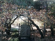 A gate on the grounds of Westerbeke Ranch.