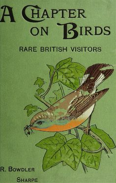 A chapter on birds : rare British birds