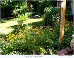 My wildflower garden and grass garden photo by sgolis