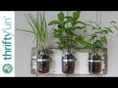 He takes old canning jars to make the perfect herb garden! – Crafty House