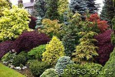 Популярные виды и сорта ели (29 фото) Privacy Landscaping, Hillside Landscaping, Outdoor Landscaping, Front Yard Landscaping, Outdoor Gardens, Landscaping Ideas, Landscaping With Trees, Hydrangea Landscaping, Landscaping Contractors