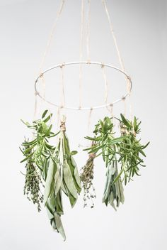 DIY : Herb mobile. M