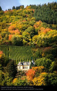 Foto 'Schloß mit viel Herbst' von 'derProjektor'