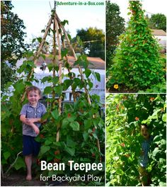 How to Make a Bean Teepee for Backyard Play