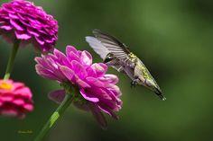 Simple Pleasure Hummingbird Delight Photograph