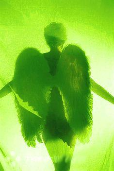 Resultado de imagem para green angel