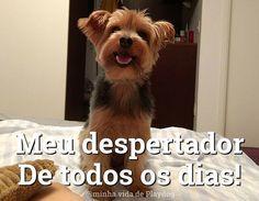 O MELHOR DESPERTADOR DO MUNDO!!! ❤❤ #caopanheiro #petmeupet #luludapomerania #viralata #bulldogfrances #pug #bulldogfrances #cachorro #maltes #yorkshire #amocachorro #maedecachorro #paidecachorro #filhose4patas