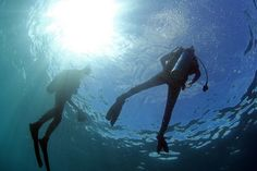 Cabo Pulmo diving