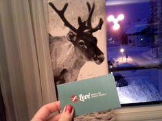 What, there is a reindeer in my room?  Kaamoksen karkottaja - Break Sokos Hotel Levi - Pää Pilvissä