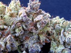 DJ Short Blueberry (Indica)http://www.spliffseeds.nl/silver-line/blue-berry-seeds.html