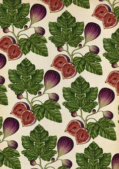 Fig, a repeat pattern by Katie Scott Koch Tattoo, Illustrations, Illustration Art, Textile Patterns, Print Patterns, Pattern Print, Textiles, Sibylla Merian, Keramik Design