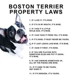 Property Laws of the Boston Terrier Dogs. http://www.bterrier.com/boston-terrier-property-laws-picture/ https://www.facebook.com/bterrierdogs